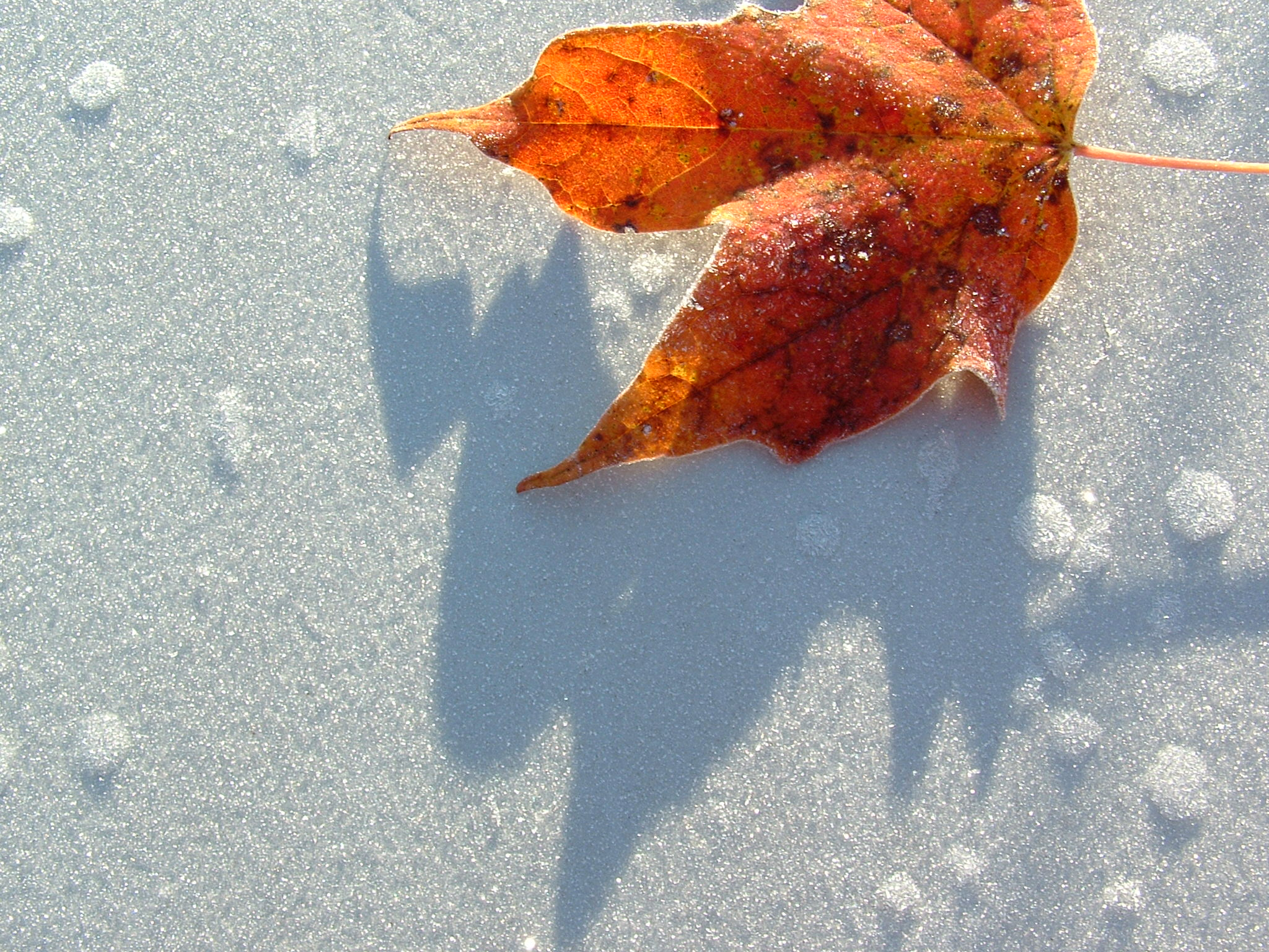 CHRISTIANA - Inverno (1)